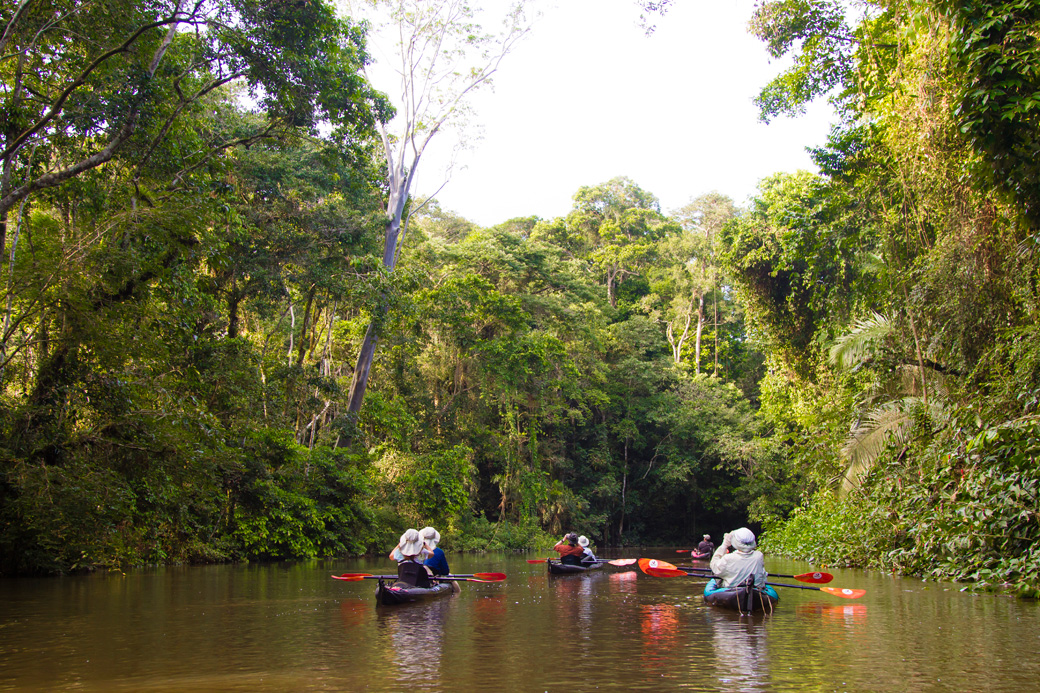 Kayaking group paddling down an amazon jungle river