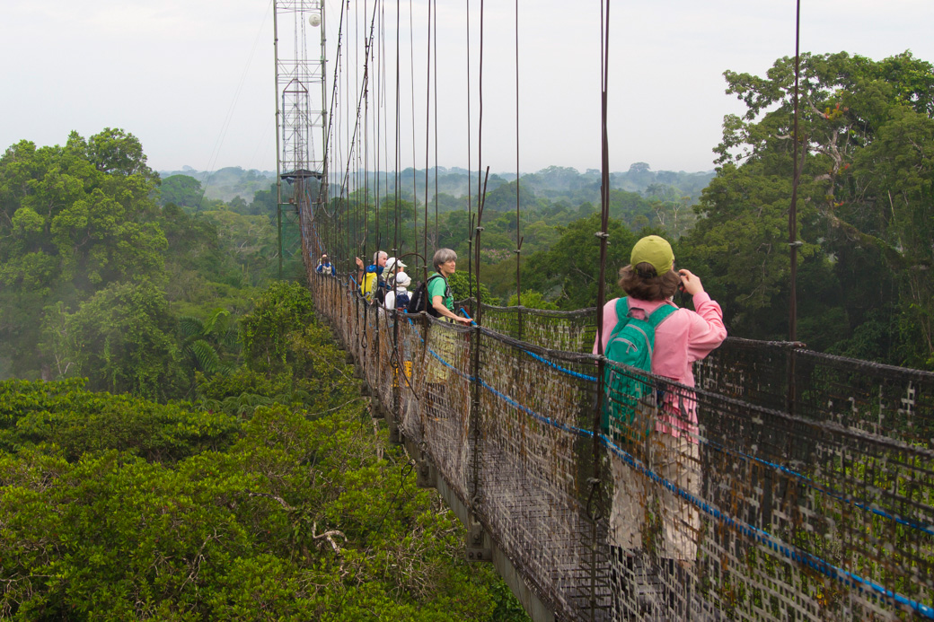 Wildlife viewing from the jungle canopy walk at Sacha Lodge