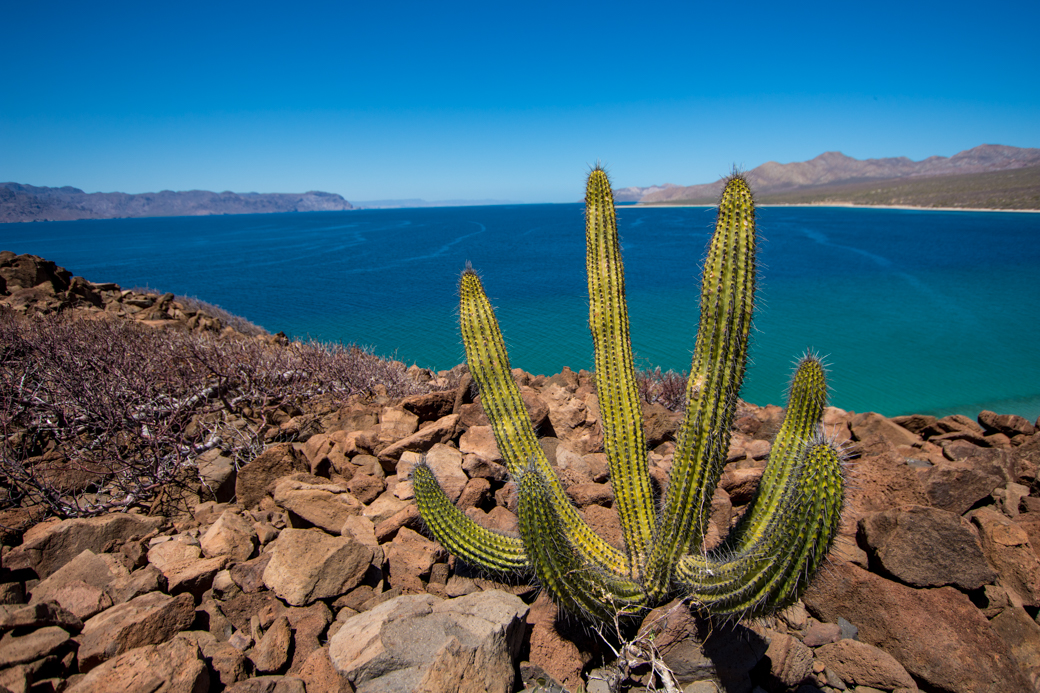 Baja Sea of Cortez Scenic Cactus