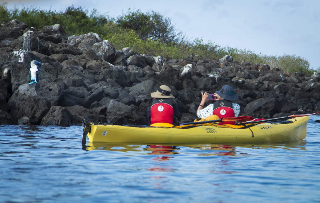 Galapagos kayakers photograph a blue footed boobie