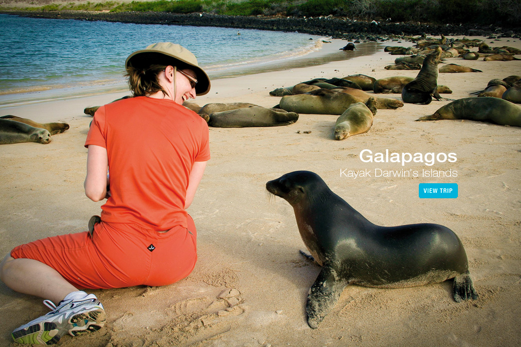 Galapagos kayaking tour - kayaker with sea lion pup
