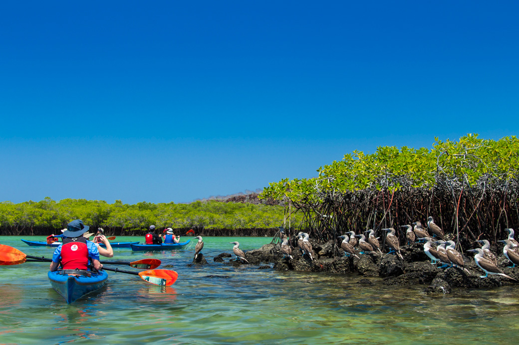Galapagos Kayaking Tours  -  A Land Based Kayak Exploration of the Galapagos Islands