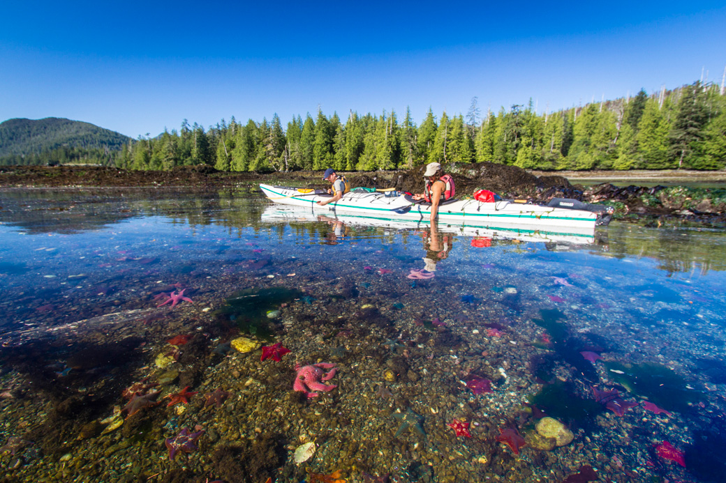 Kayaking Tours Haida Gwaii - Sea Stars at Burnaby Narrows