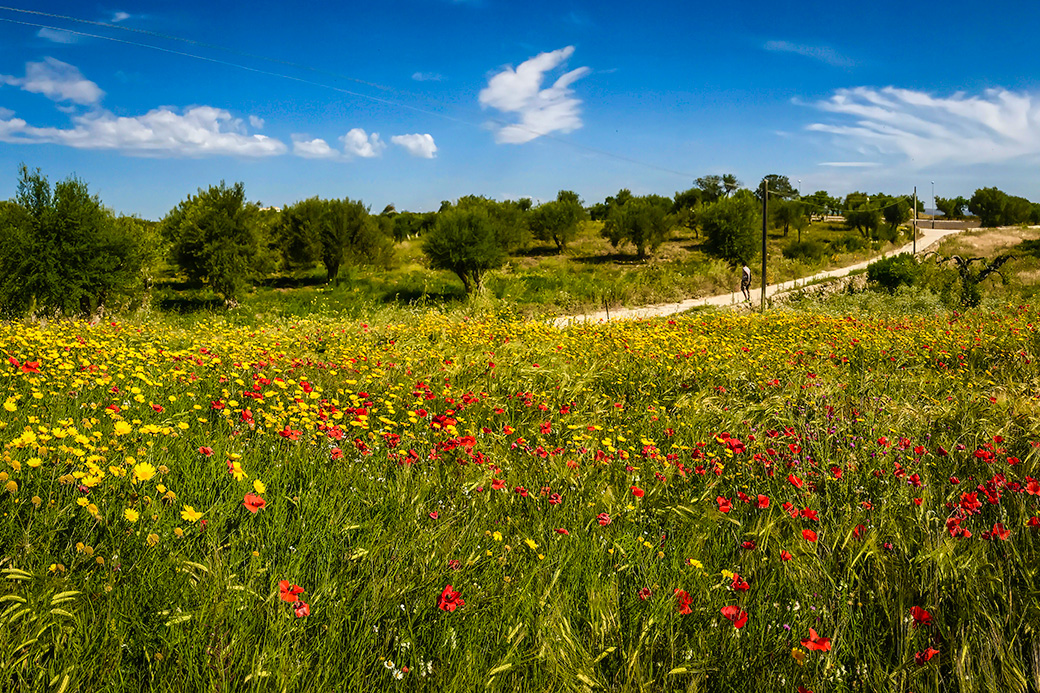 Sicily Tour Field of Wildflowers