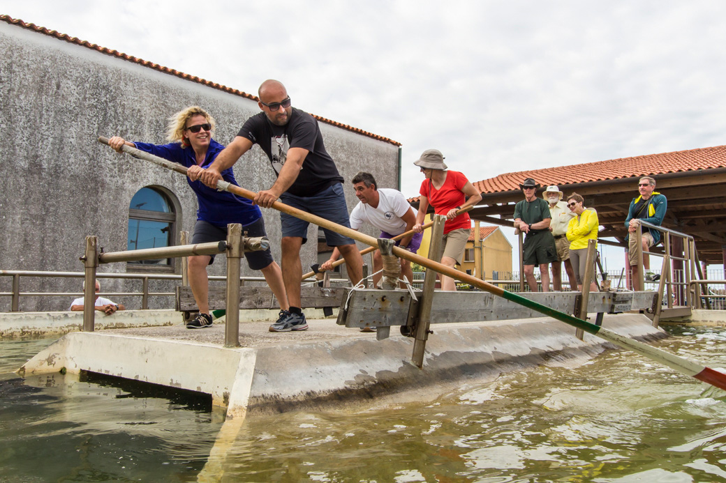 Venetian rowing class at the Remiera Pelestrina